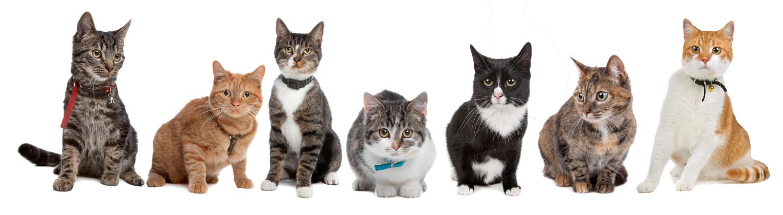 7 katten op een rijtje.