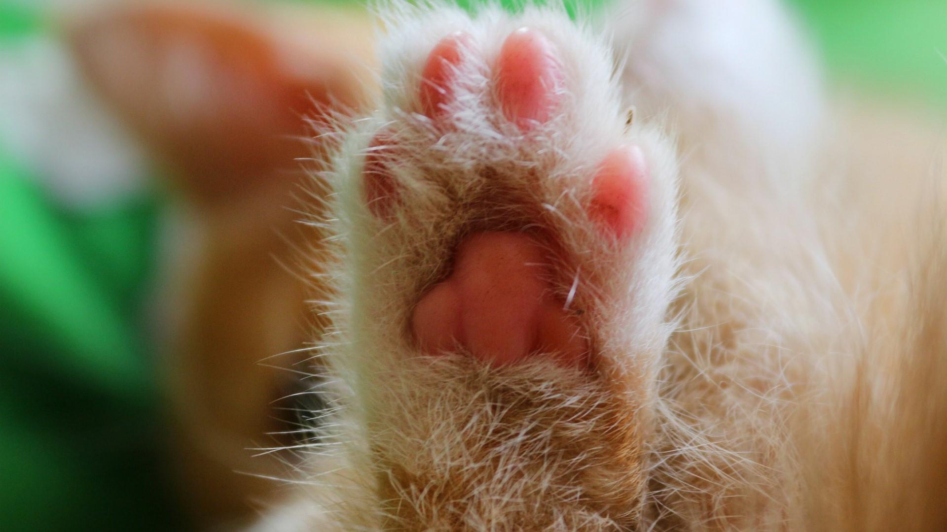 de poot van een kat