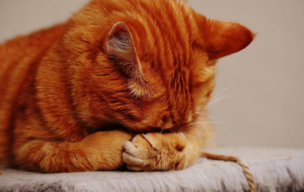 rode slapende kat