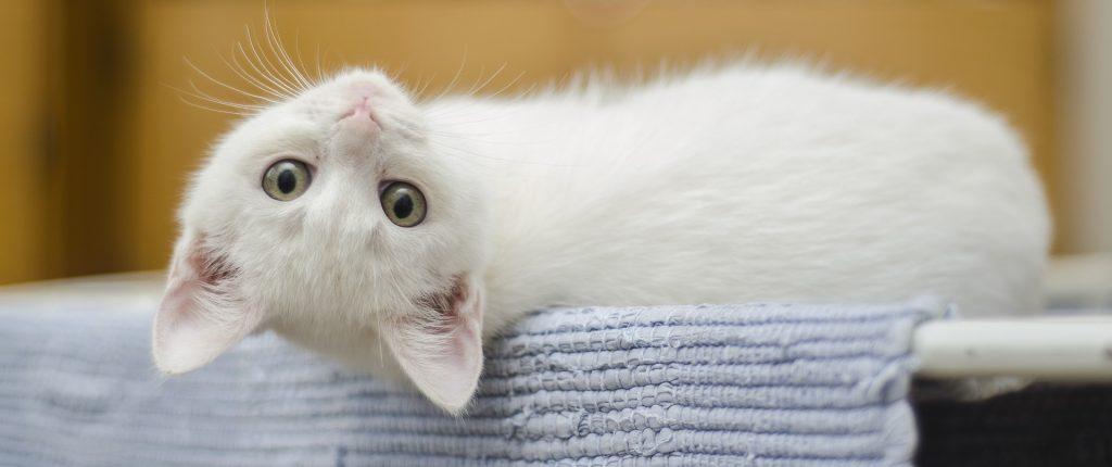 wit kitten